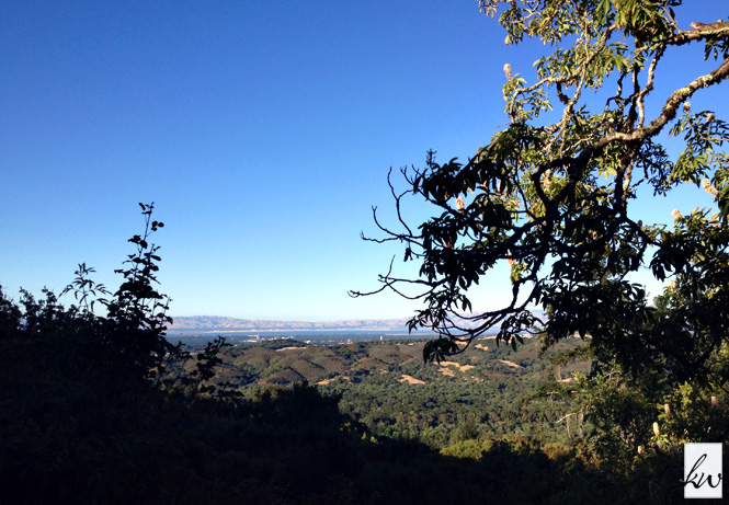 A view of Silicon Valley from one of my favorite hiking trails in the Santa Cruz Mountains