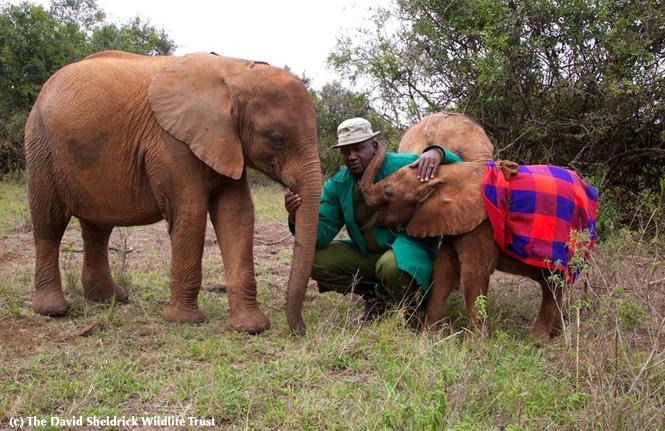 Lemoyian & Mbegu, August 2014 - The David Sheldrick Wildlife Trust