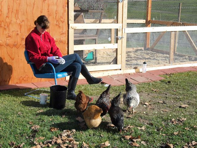 Erin and her chickens, the Gilmore Girls