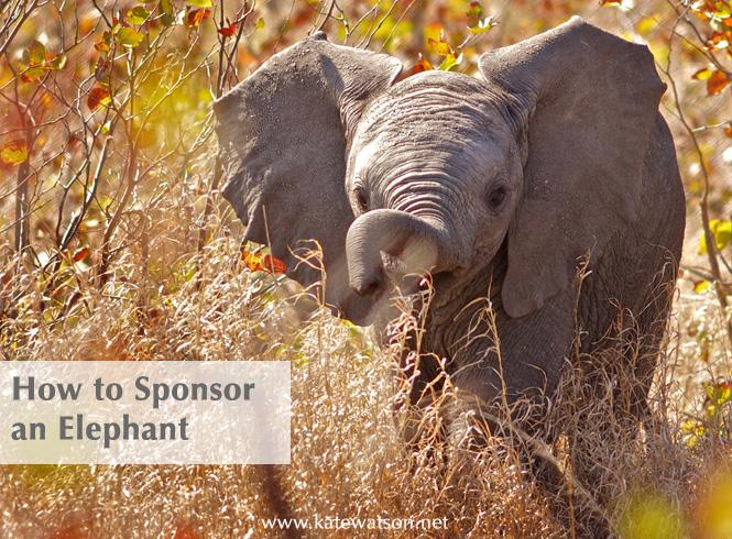 How to Sponsor an Elephant